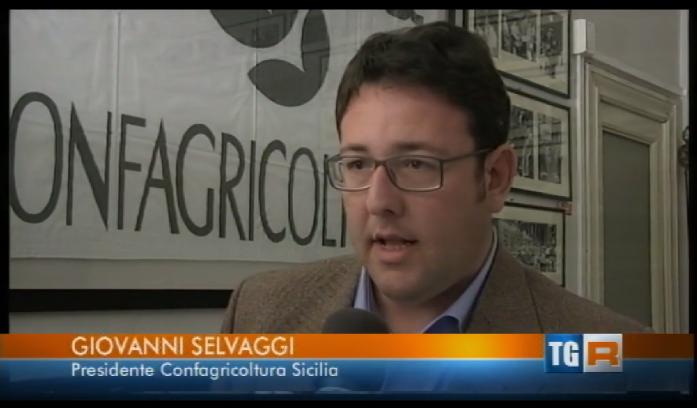 Agrumi: succhi Made in Sicily, servono regole certe