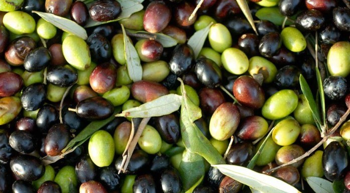 UE autorizza invasione d'olio d'oliva tunisino. Pronti a bloccare i porti per difenderci.