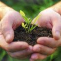 Pubblicati i decreti per ristrutturazione dei crediti agrari e capitalizzazione aziende