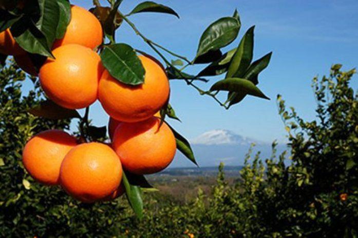 Agrumicoltura e frodi alimentari: Selvaggi scrive al Ministro Centinaio